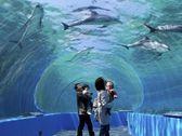 【周辺観光】のとじま水族館
