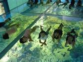 【海面浮遊体験】お子様に大人気!まるで海の中にいるような感覚でかわいいお魚たちを見ることができるよ!