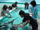 【ふれあい館】本物のサメ肌やタコの吸盤など、実際に生き物たちと触れ合えます♪