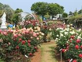 【バラ園】3000平方メートルの敷地に9系統200品種900株のバラを植栽しています。