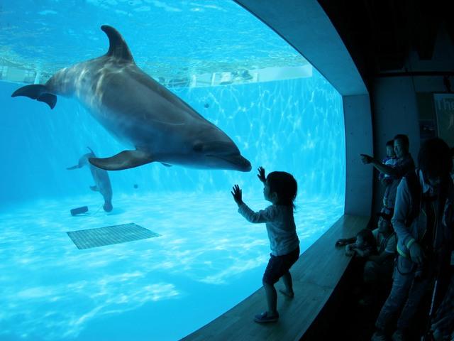 【イルカプール】海きららの可愛いイルカたちに会いに来ませんか?