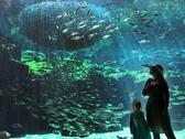 【九十九島湾大水槽】国内でも珍しい屋外型で沖合いから沿岸までの自然環境の変化と生きものを再現。
